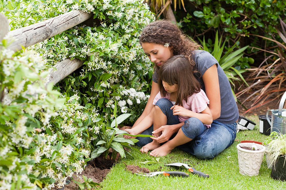 Растения в саду против комаров и мошек