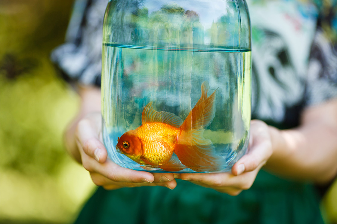 How to choose the best pets for kids latina moms for Best fish to have as pets